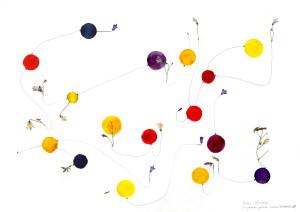 EIDOS & EKSTASE - Wiesenglockenblümchen I, 2013, Zeichnung, gepressete Blumen, Bleistift, Aquarell, 42 x 60 cm